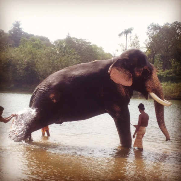 A Giant being bathed...